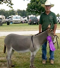 Morning Glory Dublin .....Grand Champion Gelding at Darke County Fair 2015 Donkey and Mule Show.