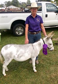 Grand Champion Jennet at the Darke County Fair 2015 Donkey and Mule Show